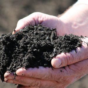 Organic Growing (Compost)